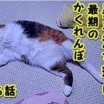 【猫 泣ける話】猫が死ぬ時に姿を消す理由が切なすぎる・最後のかくれんぼ(猫 感動 泣ける話 保護 涙腺崩壊 感涙 動物 動画 里親)招き猫ちゃんねる
