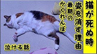 👀【猫 泣ける話】猫が死ぬ時に姿を消す理由が切なすぎる・最後のかくれんぼ(猫 感動 泣ける話 保護 涙腺崩壊 感涙 動物 動画 里親)招き猫ちゃんねる