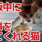 ご飯おいしい?と聞くと返事してくれる猫。まぁまぁ気に入ってくれたようです。