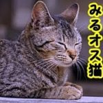 👀【猫 泣ける話】面倒見の良いオス猫と面倒見の良い友人のお話・招き猫ちゃんねる