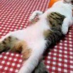 おっさんのように寝る猫 – Cat sleep like a man