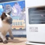 空気砲にびっくりする猫