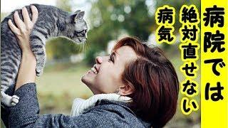 👀【病気 泣ける話】猫は飼い主を映し出す鏡です、人間の諸々の心の乱れや人間の業を猫は敏感に感じ取り吸収してしまうようです・招き猫ちゃんねる