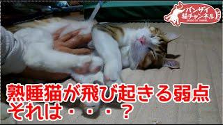 熟睡猫が飛び起きる苦手なものとは?何やってもおきないアイちゃんが飛び起きます。