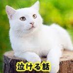 👀【感動 泣ける話猫】ゴメンネ…『ちょっと早く死んじゃったけどそんなに落ち込まないで』そう言ってお空の猫はあっけらかんとしているんじゃないですか・招き猫ちゃんねる
