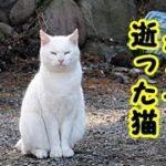 👀【猫 泣ける話】千の風になって逝った猫・神様お願いです最後の数時間をやり直させて下さい・招き猫ちゃんねる