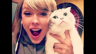 「おもしろ猫」最高におもしろ猫のハプニング●思わずに笑っちゃう猫の動画 #5