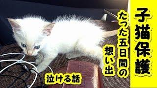 👀【感動 泣ける話 猫 】白い子猫とのたった5日間の想い出 【保護猫泣ける話 感動 動物 猫】動画 里親・招き猫ちゃんねる