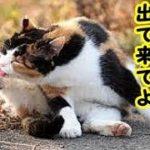 👀【猫 泣ける話】みーちゃん、たまには化けて出て来てよ・招き猫ちゃんねる