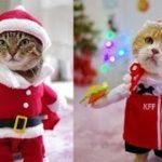 猫 可愛い 猫 おもしろ コスプレ動画【Cute Cat Santa Claus】