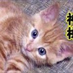 【猫 泣ける話】野良猫の神様に子猫を保護するよう頼まれた話!(猫 感動 泣ける話 保護 涙腺崩壊 感涙 動物 動画 里親)招き猫ちゃんねる