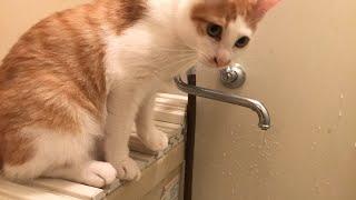 【衝撃】猫とお風呂に入っていたらとんでもないハプニングが…