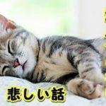 【猫 泣ける話】突然死した愛猫・涙がとまらない(猫 感動 泣ける話 保護 涙腺崩壊 感涙 動物 動画 里親)招き猫ちゃんねる