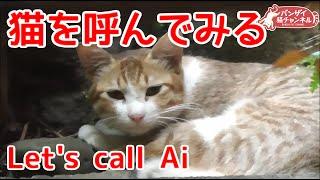 猫を呼んでみる。ちゃんと来るようである。Let's call Ai.