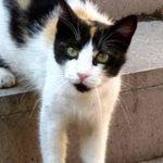 海外で日本の鰹節(猫まんま)野良猫にあげてみた  (生エザン入り)