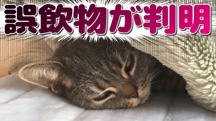 猫が誤飲【3】飲んだ異物はまさかのアレだった…