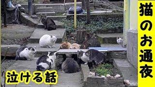 👀【猫のお通夜】野良仲間の猫たちがお通夜で集まり逝った茶トラを見守るお話・招き猫ちゃんねる