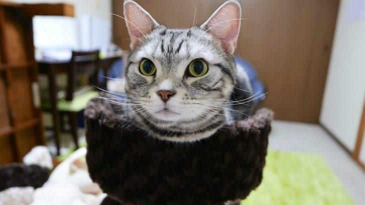 おとんとアイコンタクト 興味津々の表情が可愛い猫