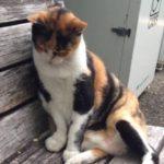 【猫】神大(神戸大学)で見かけたネコ【ねこ】 A cute cat in Kobe univ,Japan