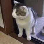 【びっくり!のらが部屋に入って来たよ!】Nora came into the room just a little bit!