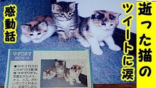 👀【感動 里親泣ける話】逝った猫のツイートに涙・21年前の譲ってもらった猫が亡くなったことを伝えるツイートに涙…招き猫ちゃんねる