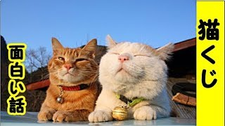 👀【猫 面白】猫のくじ引きのお話・招き猫ちゃんねる