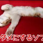 猫をダメにするソファー。くつろぎすぎな猫。Such too relaxation cat