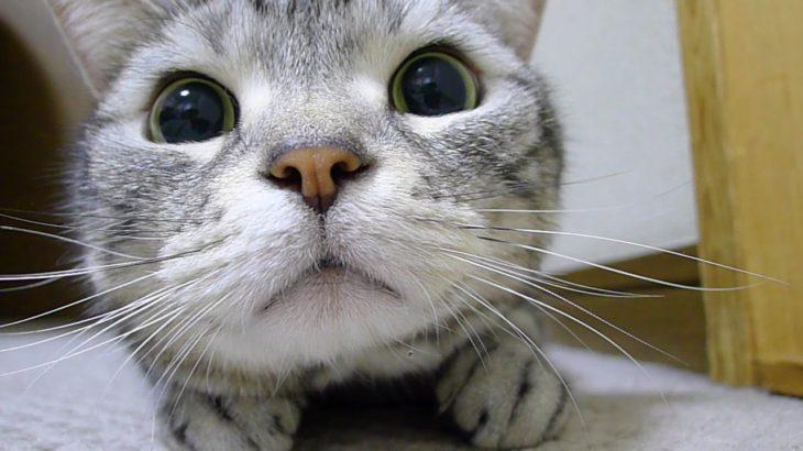 真剣であればあるほど可愛い猫