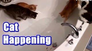 【猫の驚き】猫、びっくりしたにゃー映像集!