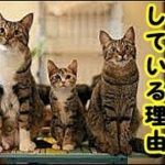 👀【猫 看取り】私が多頭飼いの道を選んだその理由・招き猫ちゃんねる