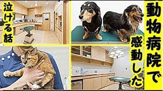 👀【猫 病気】動物病院で感動した・猫の健康診断での出来事!こんなに家族に愛されて見送られて幸せだなあと思った話・招き猫ちゃんねる