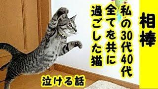 👀【猫 泣ける話】良き猫の相棒の話・お互い依存しない五分と五分の関係、私の30代と40代の全てを知っているネコでした・招き猫ちゃんねる