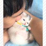 子猫にチュー😚するとツンデレなおかえしが…💕【PECO TV】