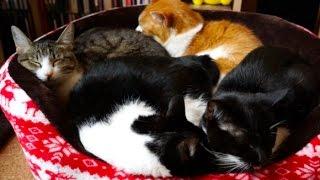 猫団子のできる過程