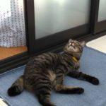 突然の揺れに驚く猫