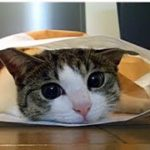 👀【猫 泣ける話】身代わり猫の話、大好きだった父に見守られながら天国へ旅立ちました・招き猫ちゃんねる