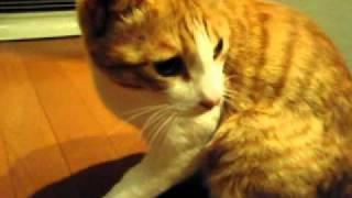 びっくり猫