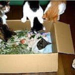 【あの世 猫のお葬式】猫は暗黙の了解の中で逝く時を自分で決めている・自分の猫生を回想している猫の不思議なお話・招き猫ちゃんねる