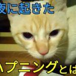 【ハプニング】真夜中に起きたハプニング😿人間も動物もビックリ😲 20180410、猫
