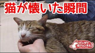 実家に帰省したらバンザイ猫アイちゃんに拒否られた(8月帰省編3)