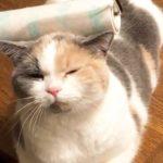 至福のひとときにうっとりする猫さん✨ 【PECO TV】