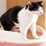 【あの世 泣ける話】猫のトイレでの不思議なお話飼い主を安心させるために トイレに現れた猫・招き猫ちゃんねる