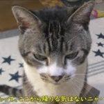 この箱が気に入った!絶対退かない猫リキちゃん☆後ろ足ケリケリで自分の物アピール☆ちょっとしたハプニングにキレる猫【リキちゃんねる 猫動画】Cat video キジトラ猫との暮らし