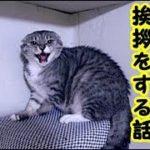 👀【感動 泣ける話】不器用で人に懐かない猫が自分の最期に飼い主に感謝とお礼とお別れの挨拶をする話・招き猫ちゃんねる