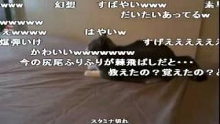 【猫動画】ニャルガクルガ (コメント付き)【ナルガクルガ】