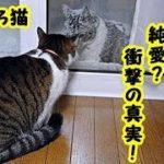 【おもしろ猫】純愛?寒さをもろともせず毎日我家の猫に会いに来る通い猫の衝撃の真実・招き猫ちゃんねる