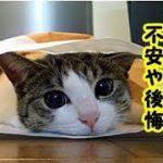 👀【猫  泣ける話】心残り・愛猫が逝って多くの飼い主が思う不安や後悔する話・また会えたらいいね・招き猫ちゃんねる