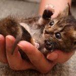 「猫かわいい」 すごくかわいい子猫 – 最も面白い猫の映画 #164