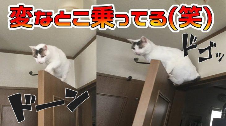 【ハプニング】うちの猫がドアの変な部分に乗ってしまいましたw【救出劇】