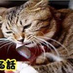 泣ける話 約束を守った猫・亡くなる時は絶対に居なくならないでねといつも言われてた猫の話・招き猫ちゃんねる